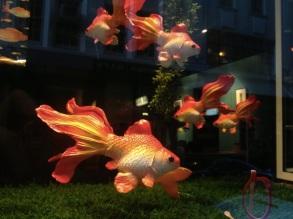 Goldfish in a display window