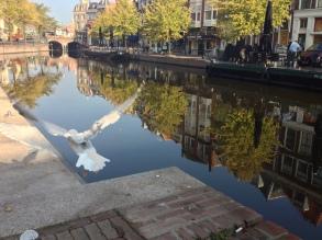 In Leiden