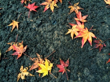 colored-leaves.jpg